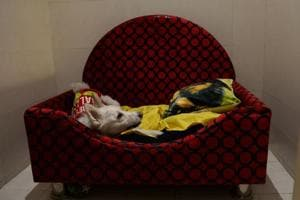 Photos: Nothing but the best at the first Luxury dog hotel in Gurgaon