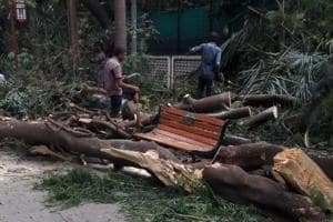 Mumbai woman crushed by tree: Police to check if residents asked for...