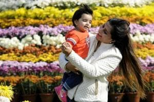 Chrysanthemum show kicks off in Chandigarh