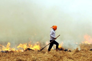 Last year, Punjab had demanded Rs 1,103 crore to check stubble burning, but it got only Rs 40 crore