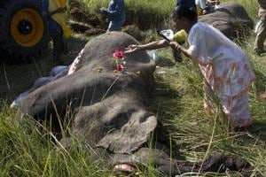 Train hit kills five wild elephants including pregnant female in Assam