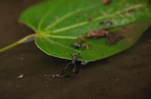 A still from the short film Upavahana by a Delhi University student.