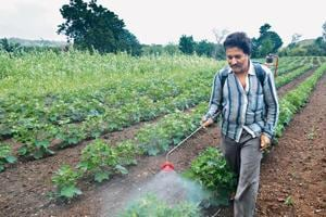Ignorance, pesticides form a fatal alliance in Maharashtra's Vidarbha