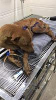 Dog loses its leg in an accident on Mumbai railway tracks, locals give...