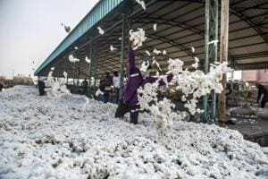 Gujarat produces around 30% of India's cotton, if one takes the average of last five years.