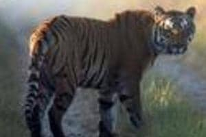 Tiger census to go digital in Jharkhand with use of mobile app to...
