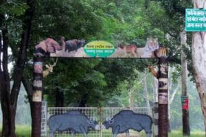 Wildlife numbers fall in Jharkhand even as forest cover increases