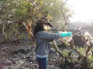 Mangrove cell in Mumbai clean up Carter Road, 7 more areas to go