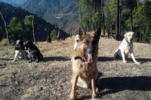 Himachal Pradesh Police dog squad gets new home
