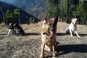 The squad comprises German Shepherds, Labradors, Retrievers, Doberman and Cocker Spaniels.