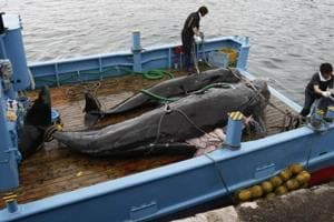 International call for Japan to halt whaling in Antarctic