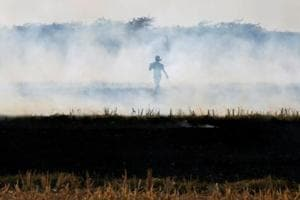 Punjab and Haryana reported 42,337 and 12,606 cases of crop burning in 2017 amid steps taken to prevent them.