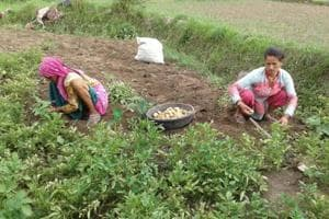 Kisan markets for hill districts in Uttarakhand to curb forced...