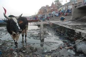 Why the CAG rap on Ganga pollution may not change anything on ground