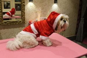 Cafés and restaurants in Delhi-NCR are organising special Christmas parties for the pooches and pet parents.