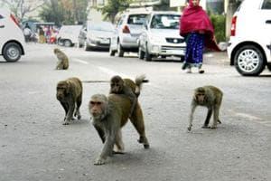 Citizen files PIL against Municipal Corporation of Gurugram for animal...