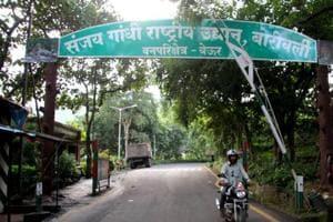 MMRC set to plant 20,000 trees in Mumbai's Sanjay Gandhi National Park