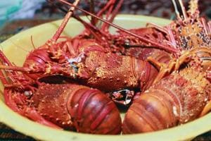 Lobsterman's gift at Christmas: Free lobsters for the needy