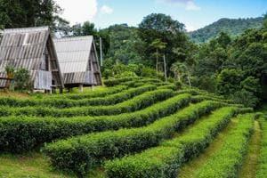 Homestays and adventure trips are key travel trends for 2018