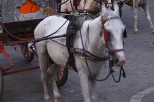 Six detained for riding horses on Mumbai's Western Express Highway