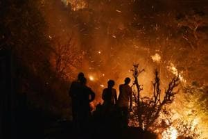 Most forest fire incidents in Maharashtra are man made, say...