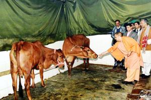 Uttar Pradesh chief minister Yogi Adityanath feeds cows while his Uttarakhand counterpart Trivendra Singh Rawat looks on, in Dehradun on Wednesday.