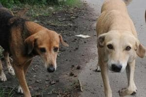Stray dog menace: Panchkula to have tricity's first dog pound