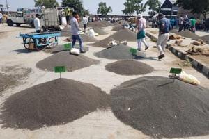 Delay in govt purchase date riles urad farmers in Rajasthan