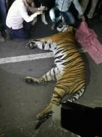 After tiger's death on NH6, Maha to take up matter with NHAI