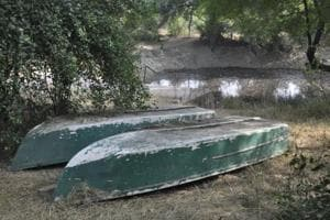 No boating facility for tourists at Rajasthan's Keoladeo National Park