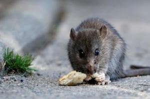 4-year-old boy found living in closet, exposed to drugs; says rats and...