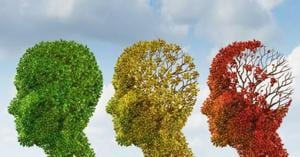 The results of the AU study conclude that fisetin can protect the brain from damage induced by aging.