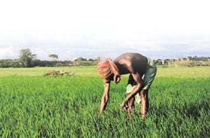 Over 7 mn Telangana farmers to get cash incentives for kharif, rabi...