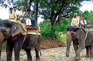 Corbett has 16 elephants serving inside the reserve.