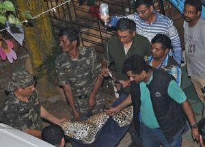 SGNP officials to train veterinary students to rescue wild animals