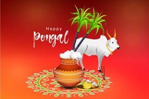 Pongal 2018: Date, significance and history of the Tamil harvest...