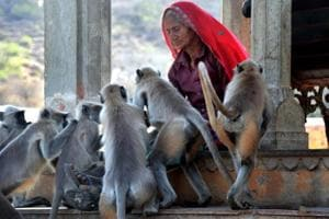 An old woman feeds langurs near Galtaji temple in Jaipur. This photo was part of an exhibition, titled 'City vs Sensitivity', by students of Rajasthan University's centre for mass communication.