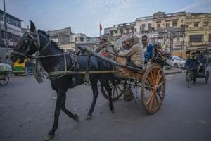 Glanders disease scare: Delhi bans entry-exit of horses, mules and...