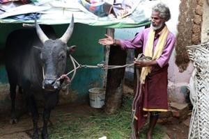 SR Ramar, a 50-year-old farmer with his prized bull Arulu, which will take part in the Jallikattu event in Aviniapuram. (Moses Abishek / HT Photo)