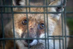 Norway to phase out fur farms by 2025 as fox, mink go out of fashion