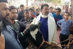 Scared of attack, Muslim corporator in Meerut hands over cow to police