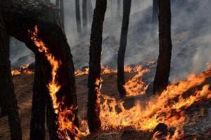 Forest fire along LoC triggers landmine blasts in J-K