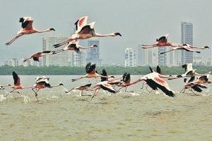 Mumbai's flamingo sanctuary rides to start from February 1