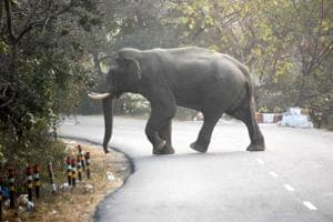 Jumbo scare in Haridwar, experts say stay indoors