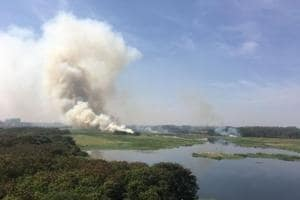 Bengaluru's Bellandur lake catches fire