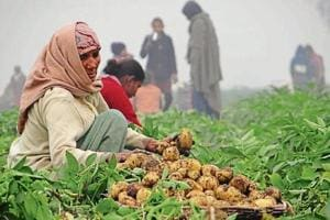 Against a production cost of around Rs 5 per kg, potato is selling at Rs 2 per kg in the wholesale market. Doaba has 93% of the state's sown area of the crop.