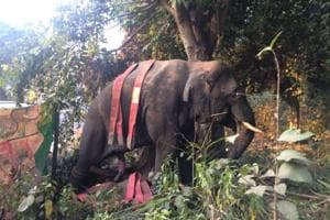 Killer tusker to be radio-collared, first in state