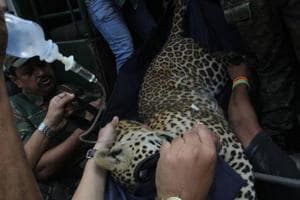 Leopard enters house near Bengaluru, caught after nine hours