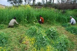 Farmers at a field in Dehradun. The Organic Agriculture Bill, once enacted, would provide legal backing to the government's initiatives aimed at developing the hill region as a full-fledged organic state.