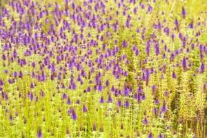 Planning a trip to the Kaas plateau? Here's why there may be less...